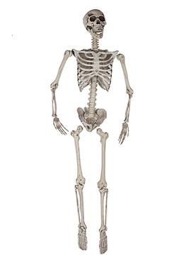 Esqueleto colgante de 1,65 metros