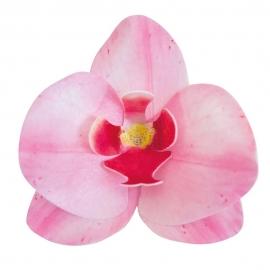 Set de 10 Orquídeas de Oblea Rosas 8 cm